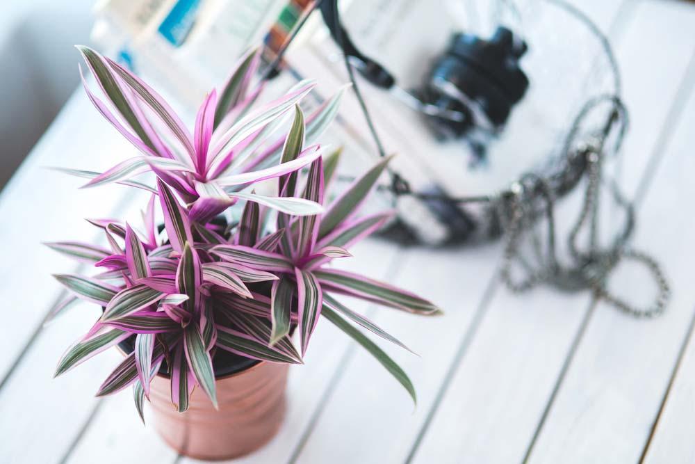 A növények és a kapcsolat